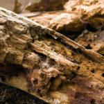 Разрушение древесины жуками топографами