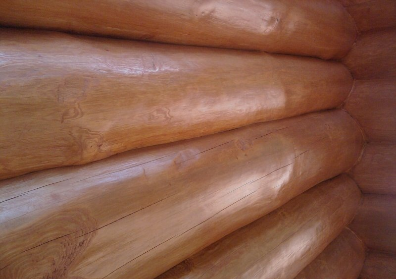 Плесень. Виды плесени. Чем опасна плесень для свежеспиленной древесины?